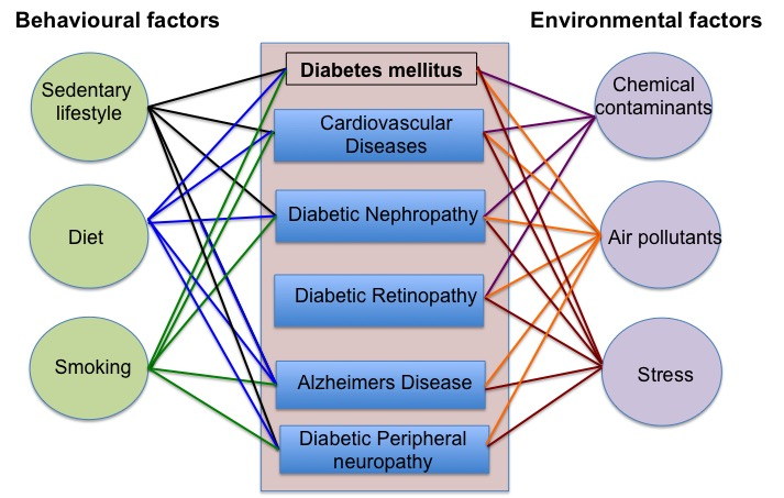 Figure 1. The complex interplay of behavioral and environmental factors that impact the pathogenesis of diabetes, diabetic macrovascular and microvascular complications and Alzheimer's disease (a form of dementia associated with type 2 diabetes).