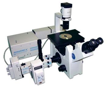 Molecular Biology And Viral Vector Production Hbku