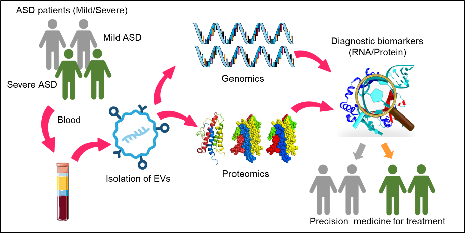 Figure 3. Schematic representation of the research goals of Dr. Park's group.EV isolation from plasma of ASD patients using size exclusion chromatography for high purity. Sorting neuronal EVs and exosome from plasma using flow cytometry. Genomics and proteomics approaches including liquid chromatography with tandem mass spectrometry to identify specific and novel protein and mRNA biomarkers for ASD as part of a precision medicine application to predict the severity of ASD.
