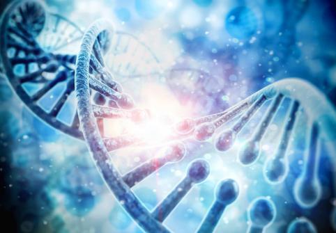 هندسة تركيبة ومصير الأنواع البرية باستخدام محفز الجينات