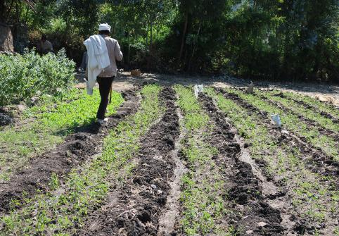 Chronic Food Security in Ethiopia Addressed in CPP Professor's Open Access Article Funded by Qatar National Library