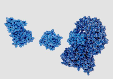 المسار غير التقليدي للجسيم الالتهابي