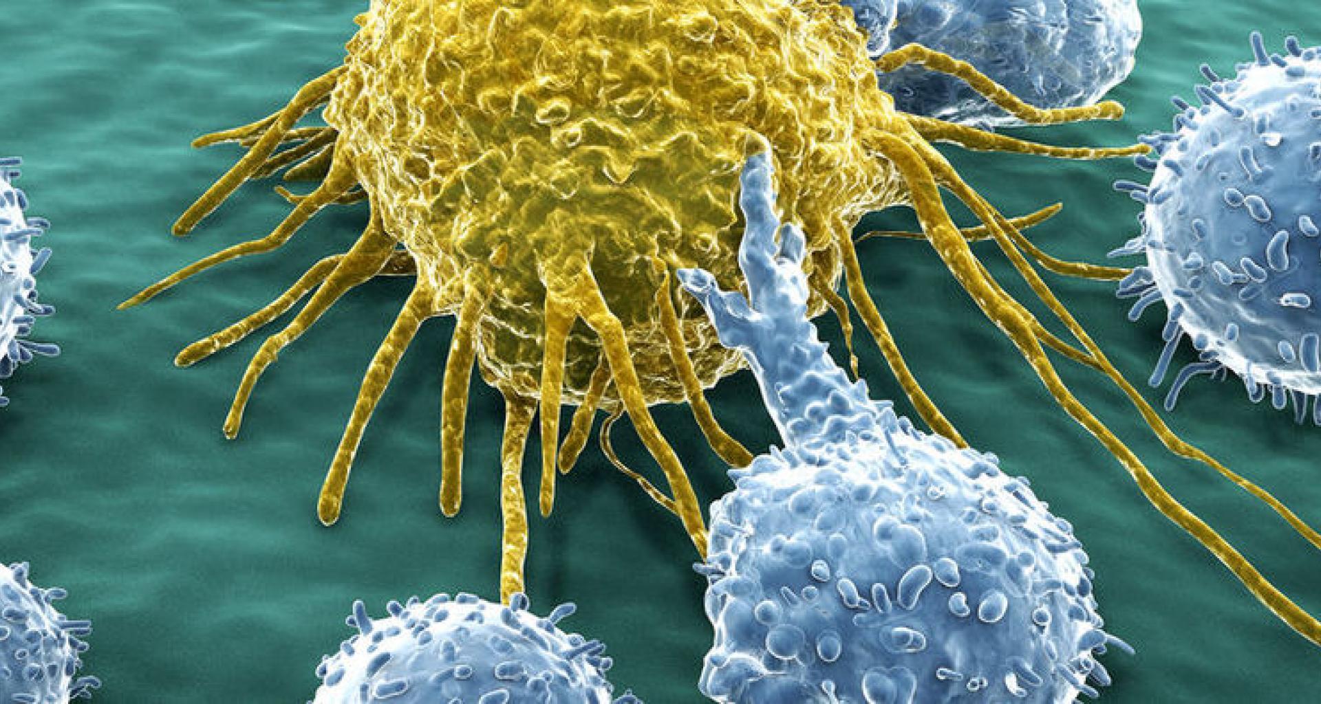 مركز بحوث السرطان