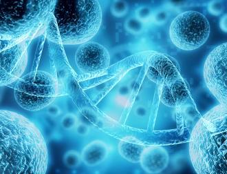 Clinical Application of Immunogenetics: Path to Precision Medicine