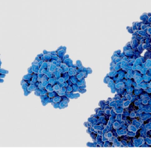 كلية العلوم الصحية والحيوية بجامعة حمد بن خليفة تستضيف ندوة سلطت الضوء  على البحوث الرائدة لعالِم مرموق حول التهاب الخلايا الميتة
